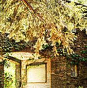 Sunlit Stone Building With Grapevines Print by HD Connelly