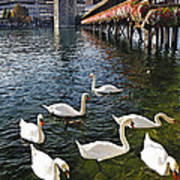 Swans Of The Chapel Bridge Print by George Oze