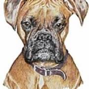 Sweet Boxer Print by Marla Saville