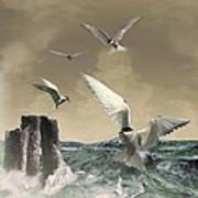 Terns In The Wind Print by IM Spadecaller