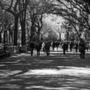 The Mall At Central Park Print by Rob Hans