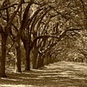The Old South Series In Sepia Print by Suzanne Gaff