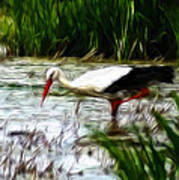 The Stork Print by Stefan Kuhn