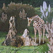 The Termite Mounds Print by Sandra Chase
