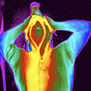 Thermogram Of A Man Taking A Shower Print by Dr. Arthur Tucker
