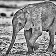 This Is Botswana No.  6 - Wait Up Mother Print by Paul W Sharpe Aka Wizard of Wonders