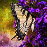 Tiger Swallowtail Feeding In Outer Space Print by J Larry Walker