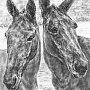 Trail Mates - Mule Portrait Art Print Print by Kelli Swan