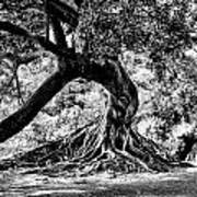 Tree Of Life - Bw Print by Kenneth Mucke