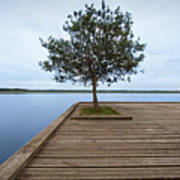 Tree On Jetty Print by Billy Currie Photography