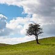 Tree Print by Semmick Photo