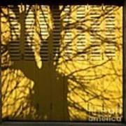 Tree Shadow Print by Bernard Jaubert