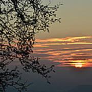 Tree Silhouette At Sunset Print by Bruno Santoro