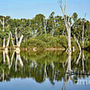 Tree Stumps In The River Print by Kaye Menner