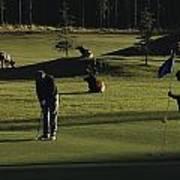 Two People Play Golf While Elk Graze Print by Raymond Gehman
