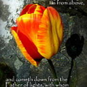 Two Tulips Shadow Scripture Print by Cindy Wright