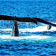 Two Whale Tails Print by Paul Ge