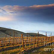 Vineyard Storm Print by Mike  Dawson