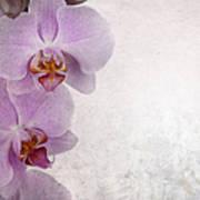 Vintage Orchids Print by Jane Rix