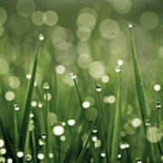 Water Drops On Grass Print by Florence Barreau