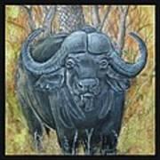 Waterbuffalo Print by Tod Locke