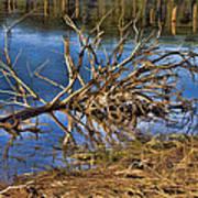 Waterlogged Tree Print by Douglas Barnard