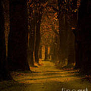 Way In The Forest Print by Zafer GUDER