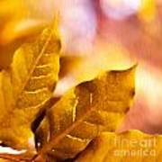 When Leaves Turn Gold Print by Artist and Photographer Laura Wrede