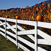 White Fence With Pumpkins Print by Garry Gay