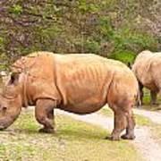 White Rhinoceros Print by Tom Gowanlock