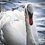 White Swan Print by Elena Elisseeva
