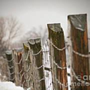 Winter Fence Print by Sandra Cunningham