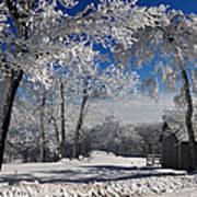 Winter Morning Print by Lois Bryan