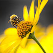 Working Bee Print by Pavlo Kolotenko