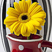Yellow Mum In Pitcher  Print by Garry Gay