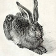 Young Hare, By Durer Print by Sheila Terry