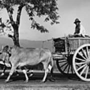 Zebu Cart Print by Richard Harrington