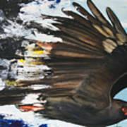 Everglades Snail Kite Print by Anthony Burks Sr