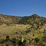 Black Mesa Cacti Print by Charles Warren