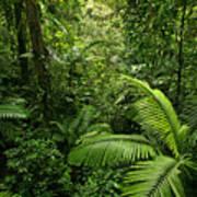 Dense Tropical Rain Forest Print by Matt Tilghman