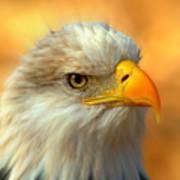 Eagle 10 Print by Marty Koch