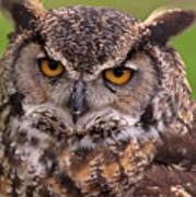 Great Horned Owl Print by Alexander Rozinov