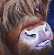 Highland Cow Print by Fiona Jack