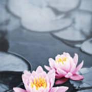 Lotus Blossoms Print by Elena Elisseeva