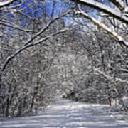 Path In Winter Forest Print by Elena Elisseeva