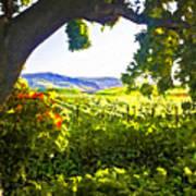 Shady Vineyard Print by Patricia Stalter