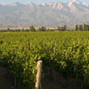 Vineyards In The Mendoza Valley Print by Michael S. Lewis