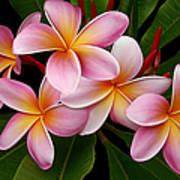 Wailua Sweet Love Print by Sharon Mau