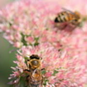 2 Bees Print by Angela Rath