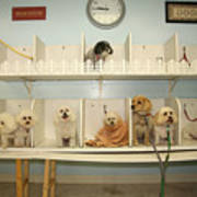 A Day At The Doggie Day Spa Print by Michael Ledray